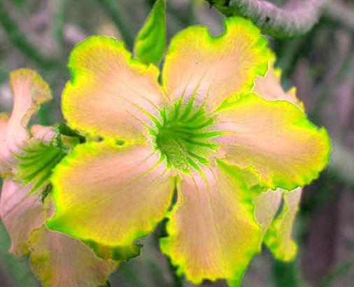 Gele bloem (bewerkte foto)
